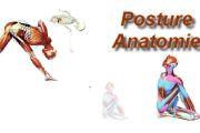 Posture et anatomie